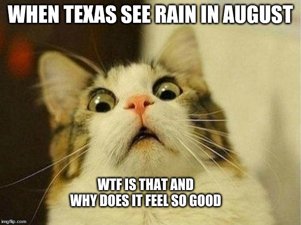 Scared Cat Meme | WHEN TEXAS SEE RAIN IN AUGUST WTF IS THAT AND WHY DOES IT FEEL SO GOOD | image tagged in memes,scared cat | made w/ Imgflip meme maker