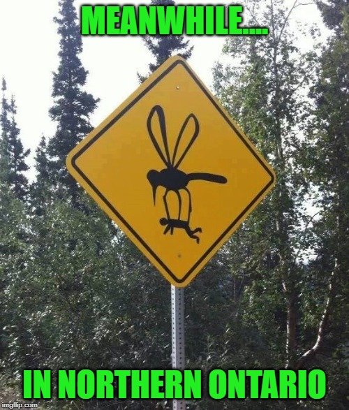 Big Bugs | MEANWHILE.... IN NORTHERN ONTARIO | image tagged in mosquitoes,northern,ontario | made w/ Imgflip meme maker