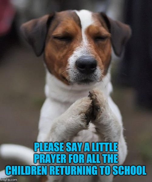 Sad that we even have to worry about something so routine. |  PLEASE SAY A LITTLE PRAYER FOR ALL THE CHILDREN RETURNING TO SCHOOL | image tagged in praying dog,memes,school,children,say a little prayer | made w/ Imgflip meme maker