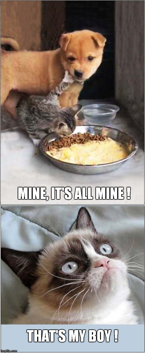 Grumpy Loves Greedy Kitty | MINE, IT'S ALL MINE ! THAT'S MY BOY ! | image tagged in cats,grumpy cat | made w/ Imgflip meme maker