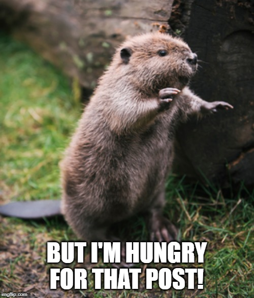 Beaver | BUT I'M HUNGRY FOR THAT POST! | image tagged in beaver | made w/ Imgflip meme maker