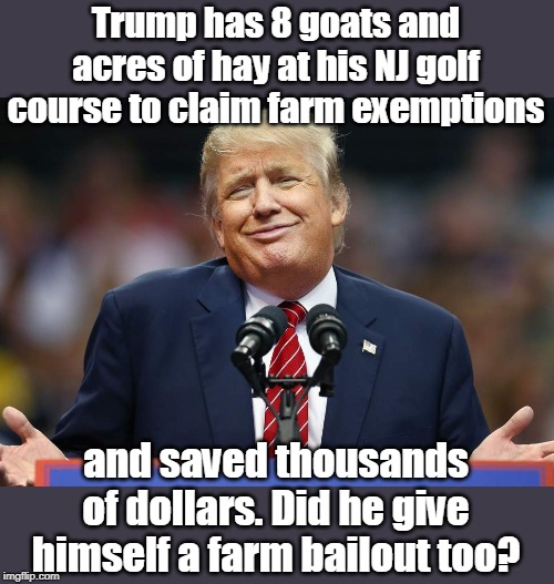 This is called tax evasion! |  Trump has 8 goats and acres of hay at his NJ golf course to claim farm exemptions; and saved thousands of dollars. Did he give himself a farm bailout too? | image tagged in tax evasion with all properties,pays no taxes,destroys farm markets,real farmers are hurting,biggest loser,jerk | made w/ Imgflip meme maker