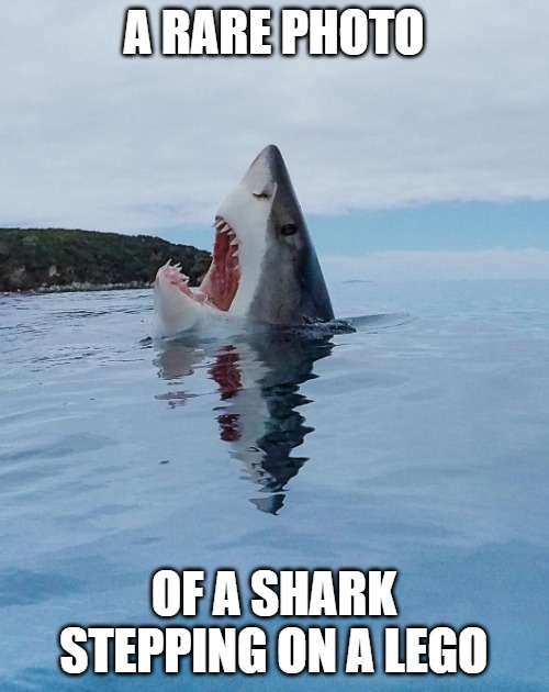 Rare image of a shark stepping on a Lego | A RARE PHOTO OF A SHARK STEPPING ON A LEGO | image tagged in rare image of a shark stepping on a lego | made w/ Imgflip meme maker