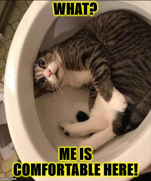 IDIOT | WHAT? ME IS COMFORTABLE HERE! | image tagged in idiot | made w/ Imgflip meme maker