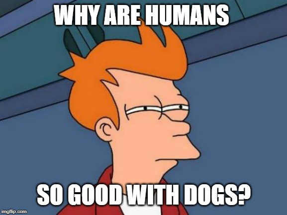 Futurama Fry | WHY ARE HUMANS SO GOOD WITH DOGS? | image tagged in memes,futurama fry | made w/ Imgflip meme maker
