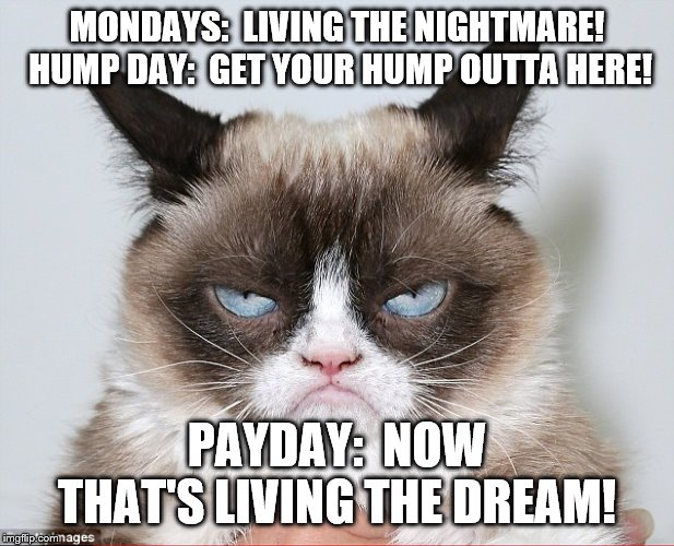 MONDAYS:  LIVING THE NIGHTMARE!  HUMP DAY:  GET YOUR HUMP OUTTA HERE! PAYDAY:  NOW THAT'S LIVING THE DREAM! | image tagged in living the dream | made w/ Imgflip meme maker