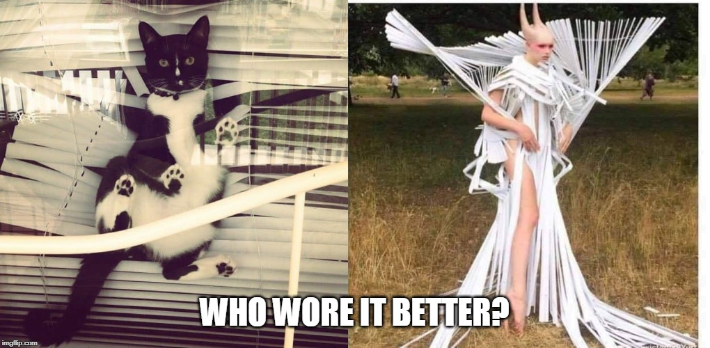 WTF? | WHO WORE IT BETTER? | image tagged in cats,memes,cat,who wore it better | made w/ Imgflip meme maker
