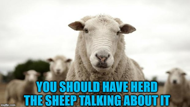 Sheep | YOU SHOULD HAVE HERD THE SHEEP TALKING ABOUT IT | image tagged in sheep | made w/ Imgflip meme maker