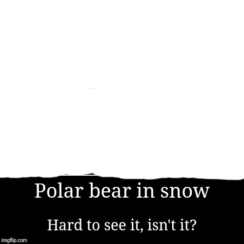 Polar bear in snow | Hard to see it, isn't it? | image tagged in funny,demotivationals,polar bear,blank white template,hard to see | made w/ Imgflip demotivational maker