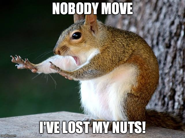 Lost my nuts! | NOBODY MOVE I'VE LOST MY NUTS! | image tagged in funny squirrel,funny nuts,nobody move | made w/ Imgflip meme maker