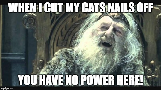 You have no power here | WHEN I CUT MY CATS NAILS OFF YOU HAVE NO POWER HERE! | image tagged in you have no power here | made w/ Imgflip meme maker