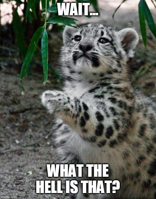 WAIT WHAT LEOPARD | WAIT... WHAT THE HELL IS THAT? | image tagged in wait what leopard | made w/ Imgflip meme maker
