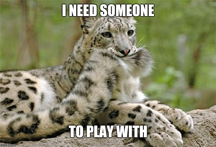I NEED SOMEONE TO PLAY WITH | image tagged in cats,memes,cat,snow leopard | made w/ Imgflip meme maker