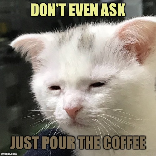 Depressed Cat | DON'T EVEN ASK JUST POUR THE COFFEE | image tagged in depressed cat,memes | made w/ Imgflip meme maker