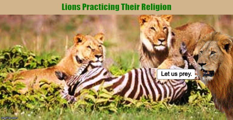 Lions Practicing Their Religion | image tagged in lions,religion,predator,let us prey,funny,memes | made w/ Imgflip meme maker