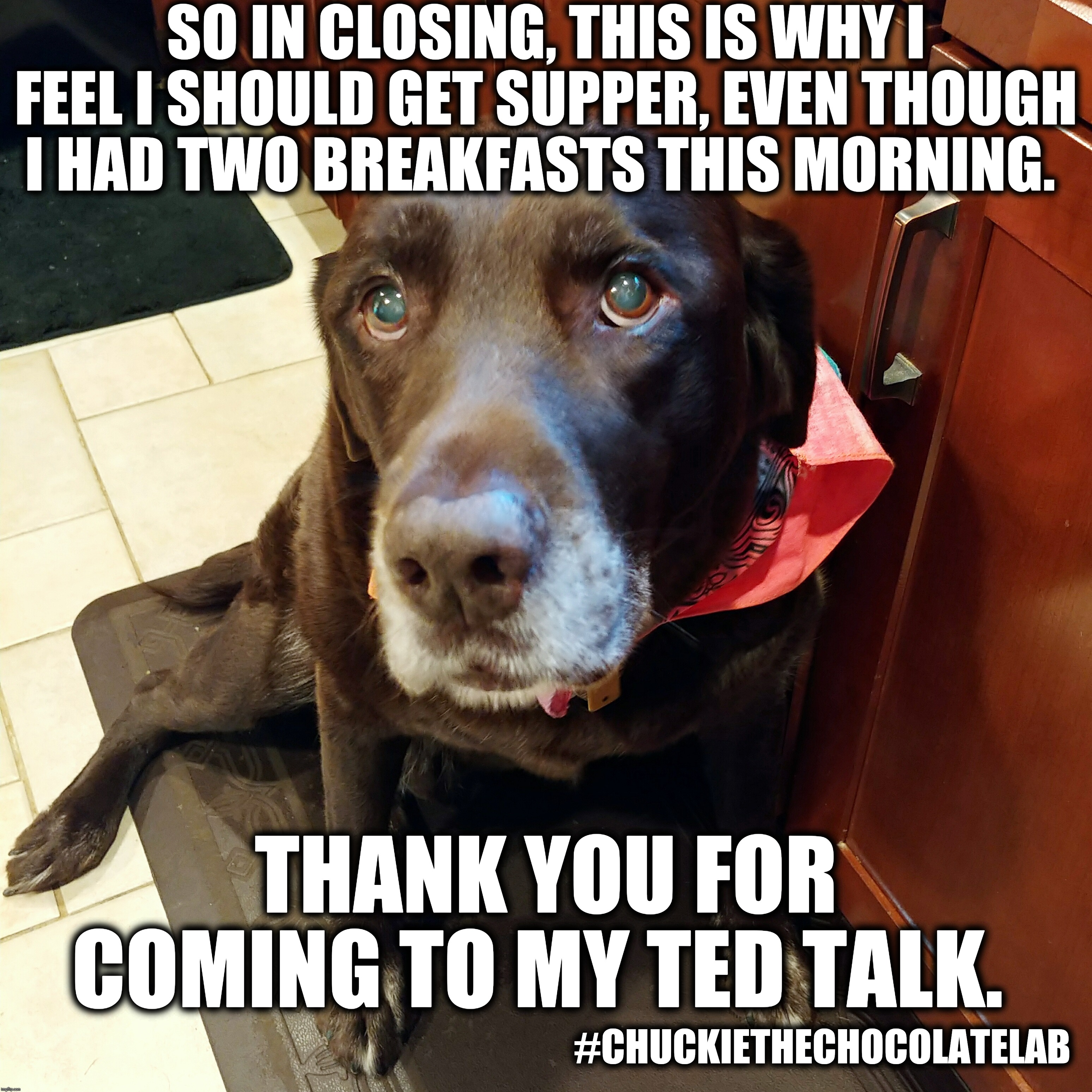 I ate two breakfasts |  SO IN CLOSING, THIS IS WHY I FEEL I SHOULD GET SUPPER, EVEN THOUGH I HAD TWO BREAKFASTS THIS MORNING. THANK YOU FOR COMING TO MY TED TALK. #CHUCKIETHECHOCOLATELAB | image tagged in chuckie the chocolate lab,funny,dogs,memes,ted talk,second breakfast | made w/ Imgflip meme maker
