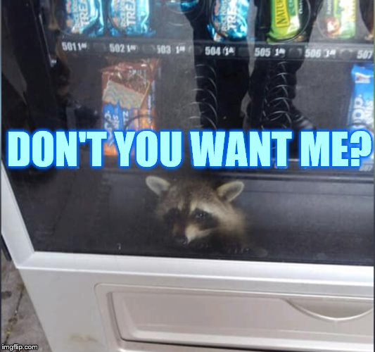 What? | DON'T YOU WANT ME? | image tagged in memes,raccoon,in,vending machine,want,me | made w/ Imgflip meme maker