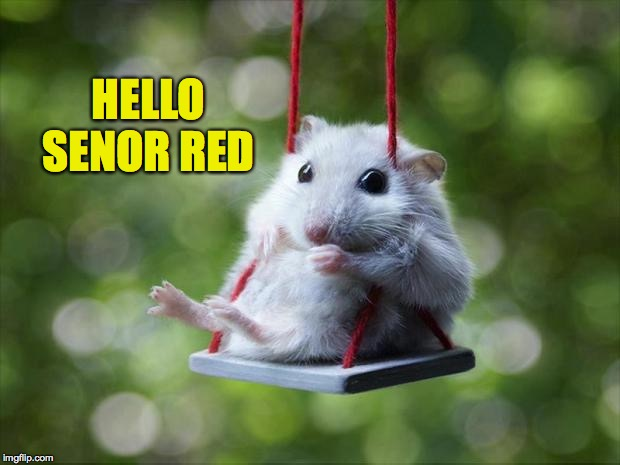 Mouse swing | HELLO SENOR RED | image tagged in mouse swing | made w/ Imgflip meme maker