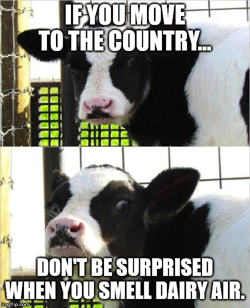 cows | IF YOU MOVE TO THE COUNTRY... DON'T BE SURPRISED WHEN YOU SMELL DAIRY AIR. | image tagged in cows | made w/ Imgflip meme maker