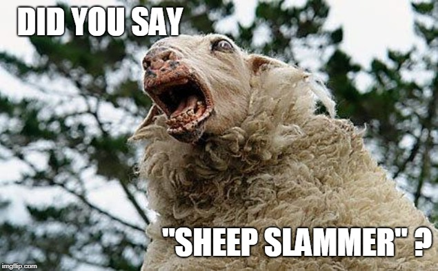 "Mad Sheep | DID YOU SAY ""SHEEP SLAMMER"" ? 