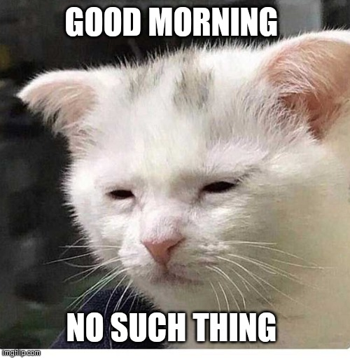 GOOD MORNING NO SUCH THING | made w/ Imgflip meme maker