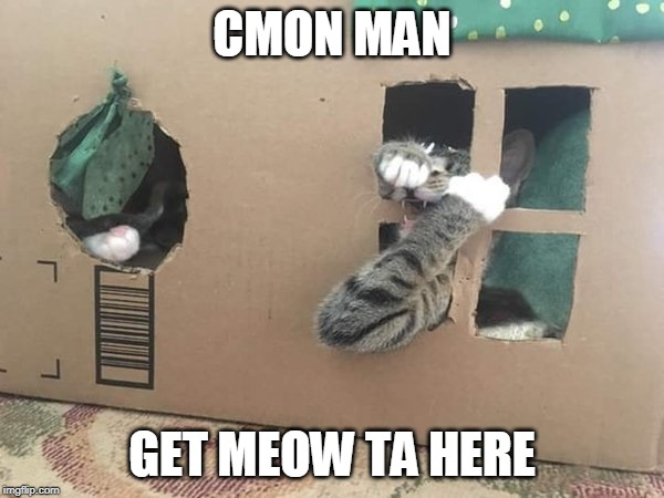 KITTY PRISON | CMON MAN GET MEOW TA HERE | image tagged in memes,cats,funny,cat | made w/ Imgflip meme maker