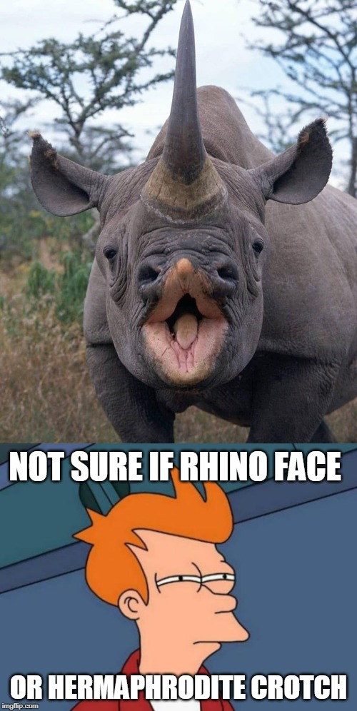 Rhino Vagino | NOT SURE IF RHINO FACE OR HERMAPHRODITE CROTCH | image tagged in memes,rhino,not sure if,futurama fry | made w/ Imgflip meme maker