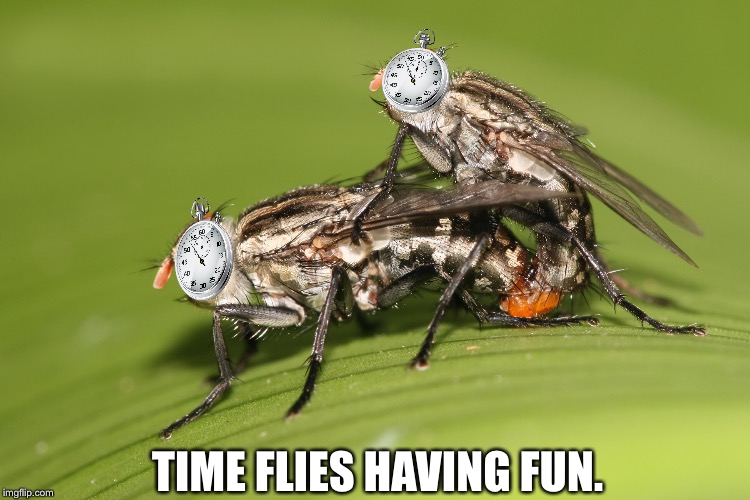 Time flies having fun. | TIME FLIES HAVING FUN. | image tagged in flies,fun,time | made w/ Imgflip meme maker