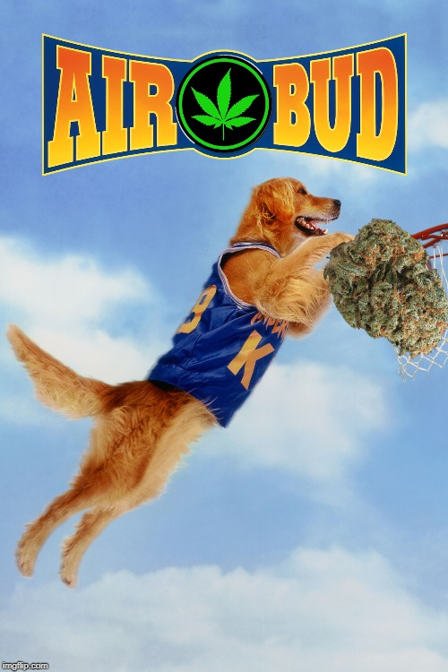 The Denver Nuggets have just introduced their new mascot! | image tagged in air bud,bud,marijuana,dog,golden retriever,basketball | made w/ Imgflip meme maker
