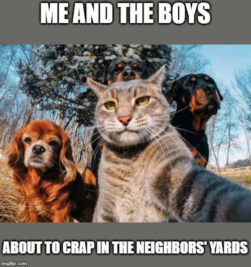 Me and the boys week - a Nixie.Knox and CravenMoordik event - Aug 19-25 | ME AND THE BOYS ABOUT TO CRAP IN THE NEIGHBORS' YARDS | image tagged in me and the boys week,funny,funny memes | made w/ Imgflip meme maker