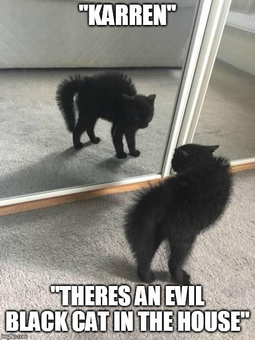 Black Cat Imgflip