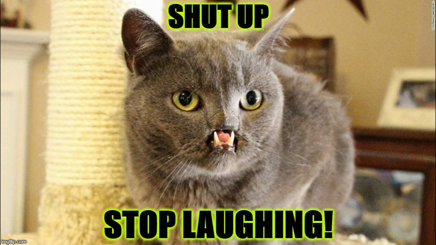 SHUT UP | SHUT UP STOP LAUGHING! | image tagged in shut up | made w/ Imgflip meme maker