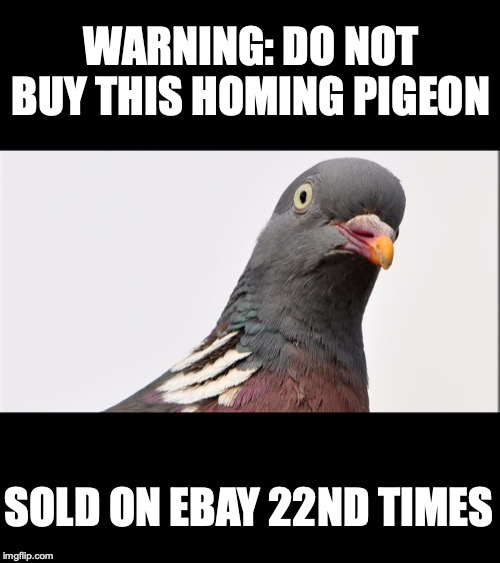 Consumer Protection Announcement | WARNING: DO NOT BUY THIS HOMING PIGEON SOLD ON EBAY 22ND TIMES | image tagged in pigeon,home,ebay | made w/ Imgflip meme maker