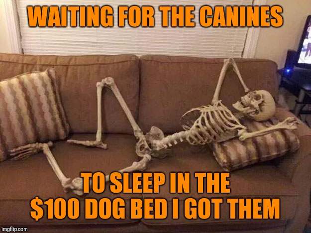 squeleton rest waiting sofa | WAITING FOR THE CANINES TO SLEEP IN THE $100 DOG BED I GOT THEM | image tagged in squeleton rest waiting sofa | made w/ Imgflip meme maker