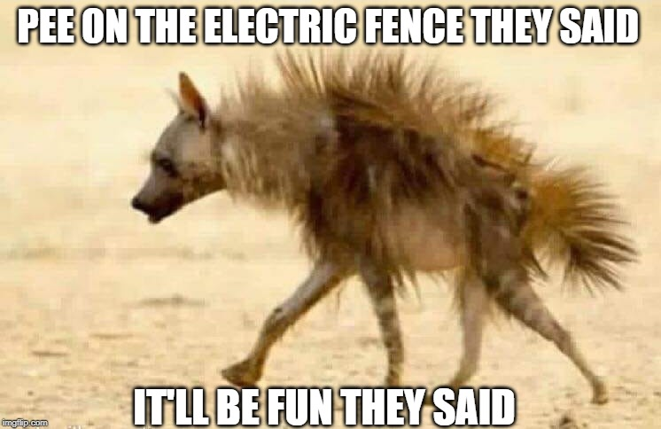Watt Just Happened ? | PEE ON THE ELECTRIC FENCE THEY SAID IT'LL BE FUN THEY SAID | image tagged in pee,electric,fence | made w/ Imgflip meme maker