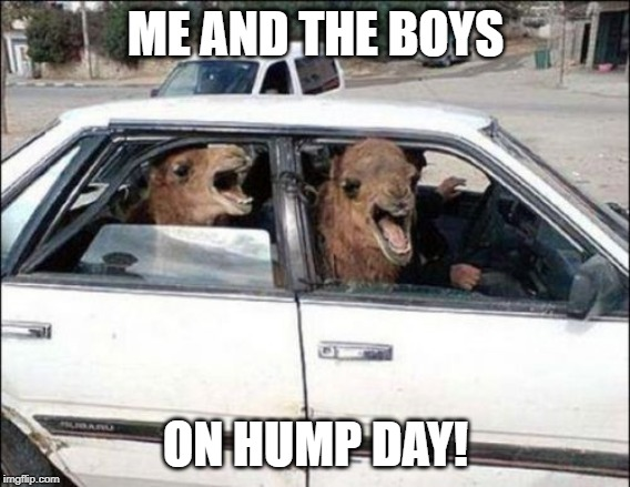 Quit Hatin |  ME AND THE BOYS; ON HUMP DAY! | image tagged in memes,quit hatin | made w/ Imgflip meme maker