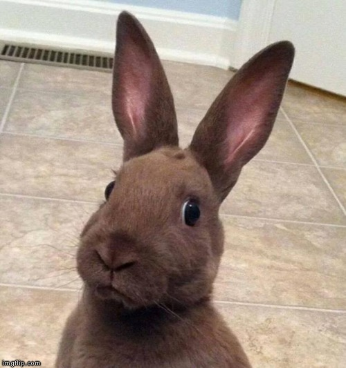 Really? Rabbit | image tagged in really rabbit | made w/ Imgflip meme maker