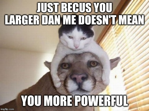 Powerful Puma |  JUST BECUS YOU LARGER DAN ME DOESN'T MEAN; YOU MORE POWERFUL | image tagged in puma,wild cat,cat,power,more power,larger | made w/ Imgflip meme maker