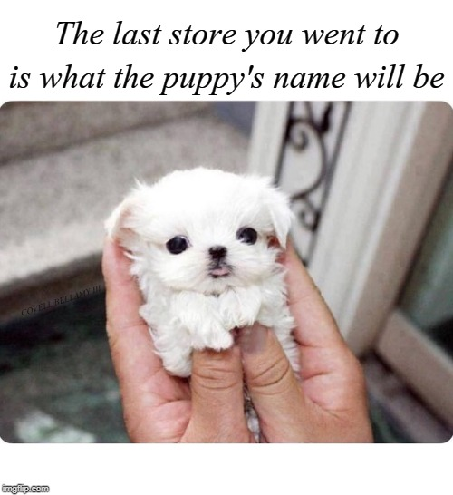 The last store you went to is what the puppy's name will be COVELL BELLAMY III | image tagged in puppy's name last store you went to | made w/ Imgflip meme maker