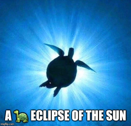 A 🐢 ECLIPSE OF THE SUN | image tagged in turtle,eclipse,sun | made w/ Imgflip meme maker