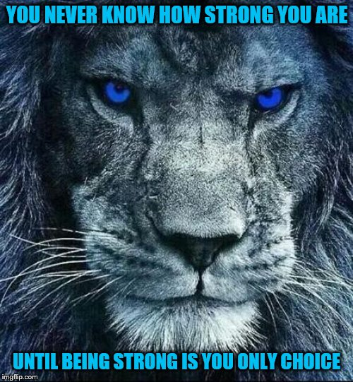 detroit lions | YOU NEVER KNOW HOW STRONG YOU ARE UNTIL BEING STRONG IS YOU ONLY CHOICE | image tagged in detroit lions | made w/ Imgflip meme maker