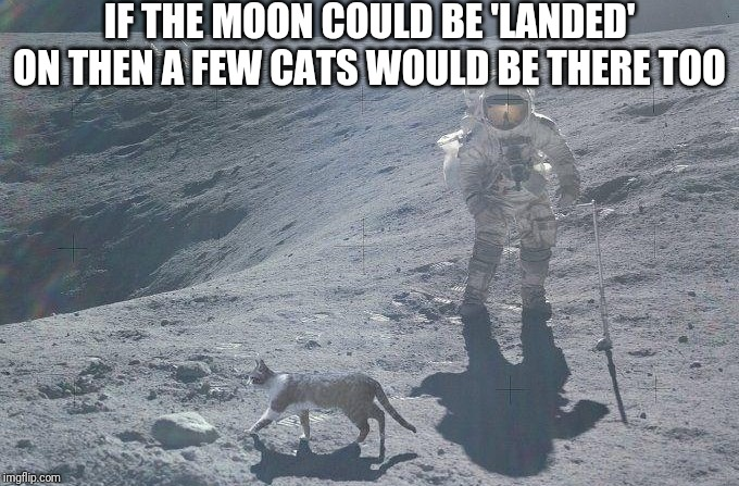 Cats! | IF THE MOON COULD BE 'LANDED' ON THEN A FEW CATS WOULD BE THERE TOO | image tagged in nasa,nasa hoax,nasa lies | made w/ Imgflip meme maker