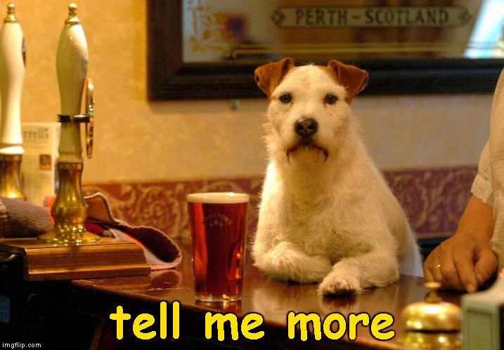 dog at bar | tell me more | image tagged in dog at bar | made w/ Imgflip meme maker