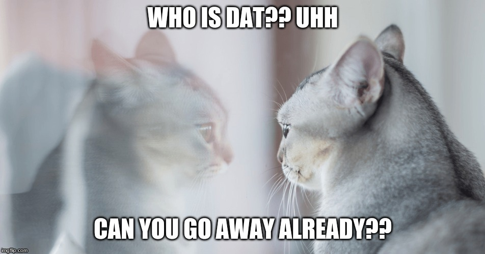 Go away!! | image tagged in go away,cat,reflection,silly,silly kitty | made w/ Imgflip meme maker