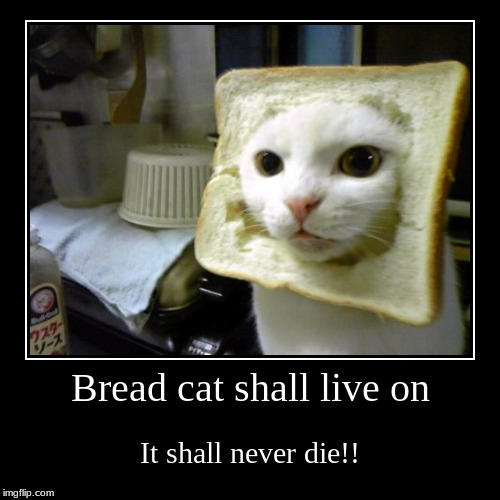 Bread Cat never ends... | Bread cat shall live on | It shall never die!! | image tagged in funny,demotivationals | made w/ Imgflip demotivational maker