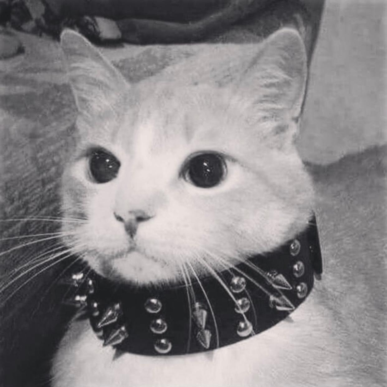 Knife Cat Meme Transparent