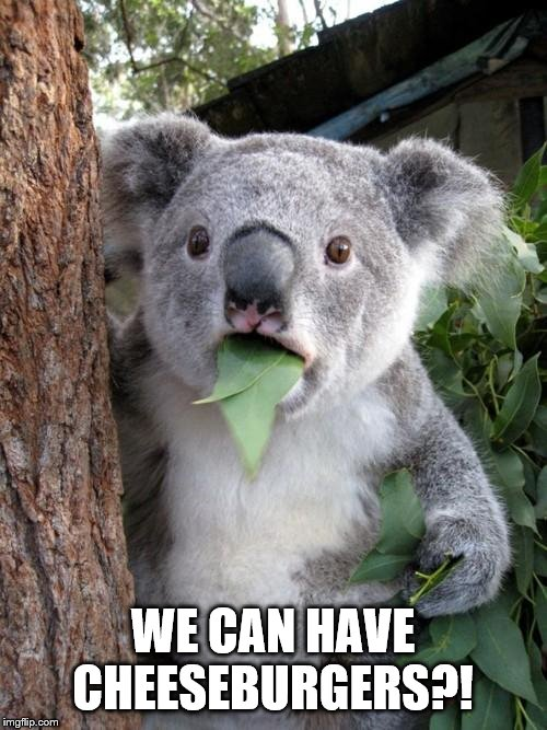Surprised Koala Meme | WE CAN HAVE CHEESEBURGERS?! | image tagged in memes,surprised koala | made w/ Imgflip meme maker