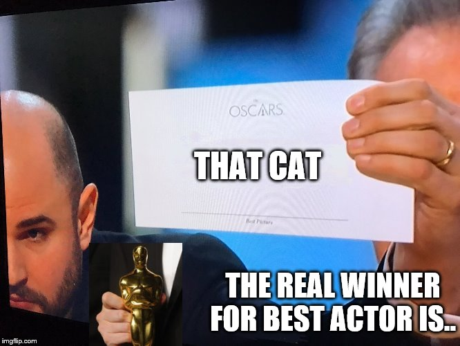 Oscars Correction | THAT CAT THE REAL WINNER FOR BEST ACTOR IS.. | image tagged in oscars correction | made w/ Imgflip meme maker