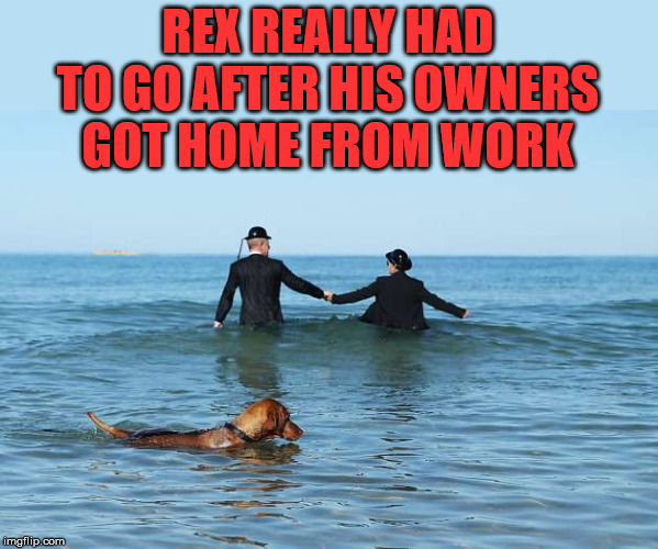 He really held it in | REX REALLY HAD TO GO AFTER HIS OWNERS GOT HOME FROM WORK | image tagged in potty humor,dog,good boy | made w/ Imgflip meme maker