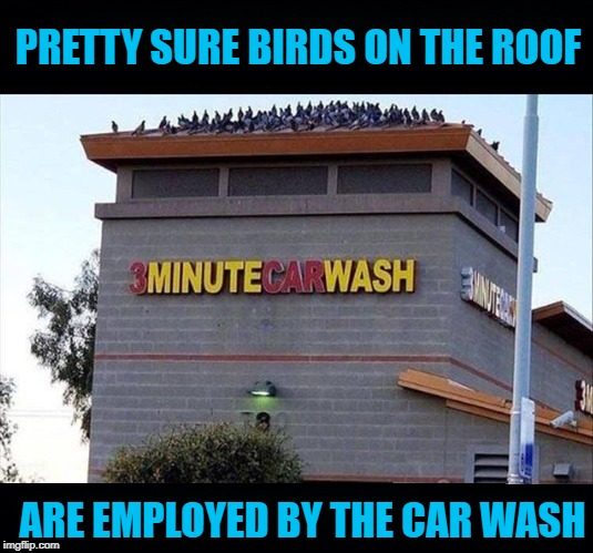 Workin' At TheCar Wash |  PRETTY SURE BIRDS ON THE ROOF; ARE EMPLOYED BY THE CAR WASH | image tagged in birds,car wash | made w/ Imgflip meme maker